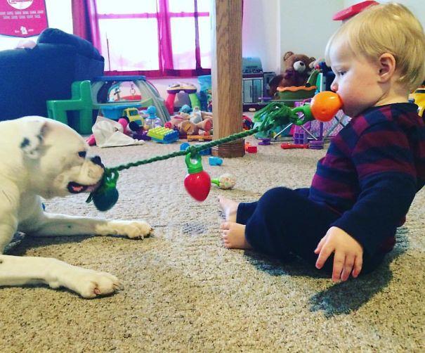 perro y niño jugando