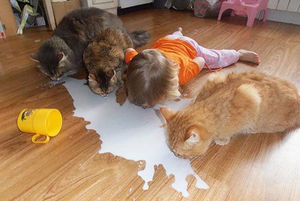 niño tomando leche con lso gatos