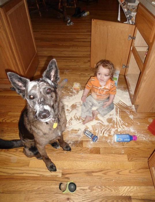 perro y niño con harina