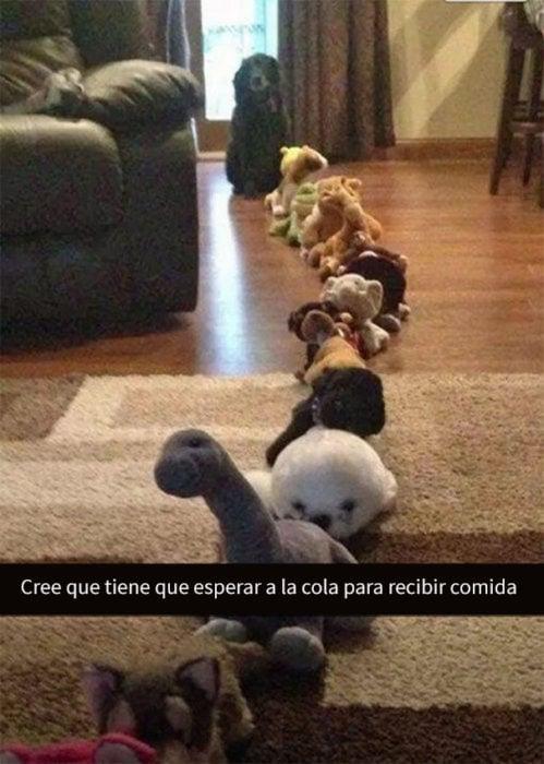 snapchat de perro