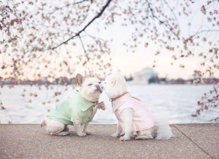 Cachorros que se comprometieron durante su sesión de fotos