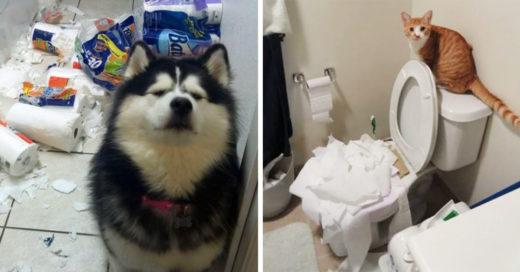 20 Mascotas que trataron de disimular sus desastres de una forma muy épica