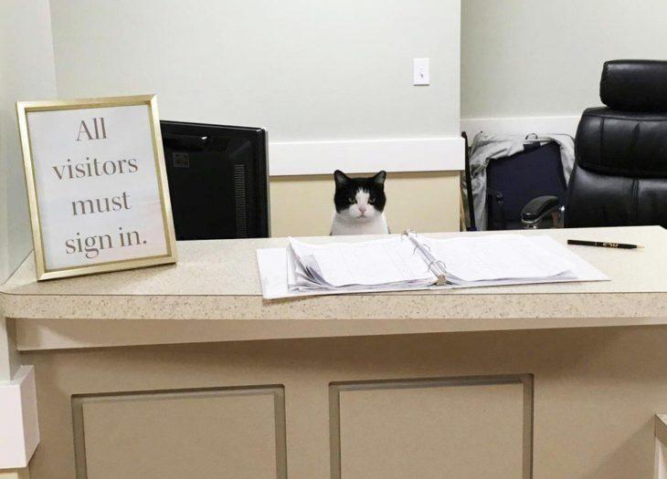 gatita oreo es la recepcionista