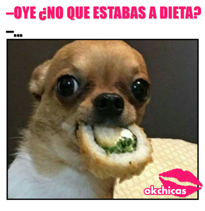perro chihuahua comiendo sushi