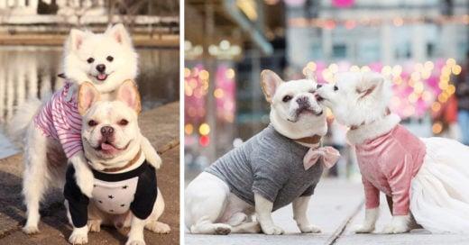 Estos dos cachorros se comprometieron y sus fotos son adorables
