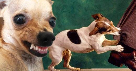 Los perros pueden juzgar a los humanos por su comportamiento: estudio