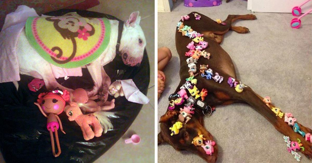 25 Fotografía que comprueban porque un niño y una mascota no deben de estar juntos