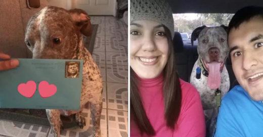 Su ex-esposo le envía un obsequio a su perro después de dos años de separación