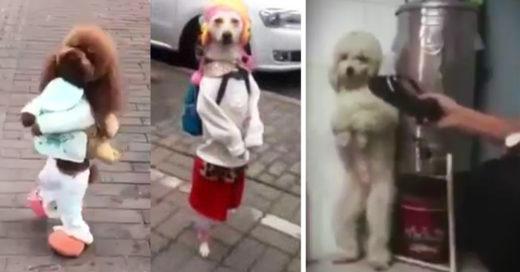 Los animales que caminan en dos patas son severamente maltratados