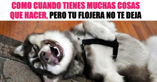 15 Divertidos memes de perros felices que te sacarán una sonrisa