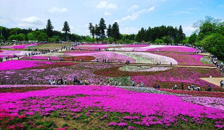 Flores de Japón