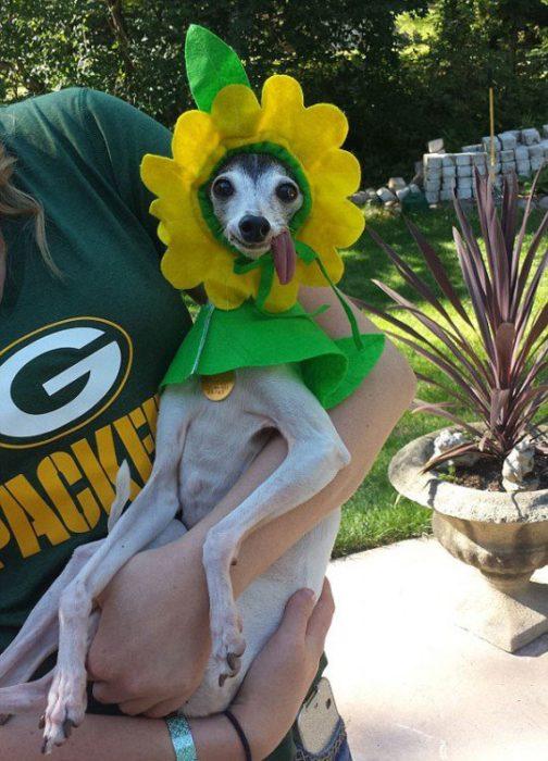 perro disfrazado de flor