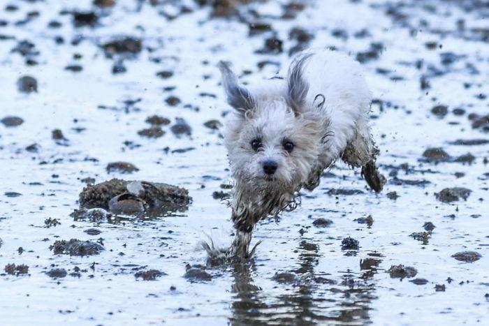 Perros con lodo