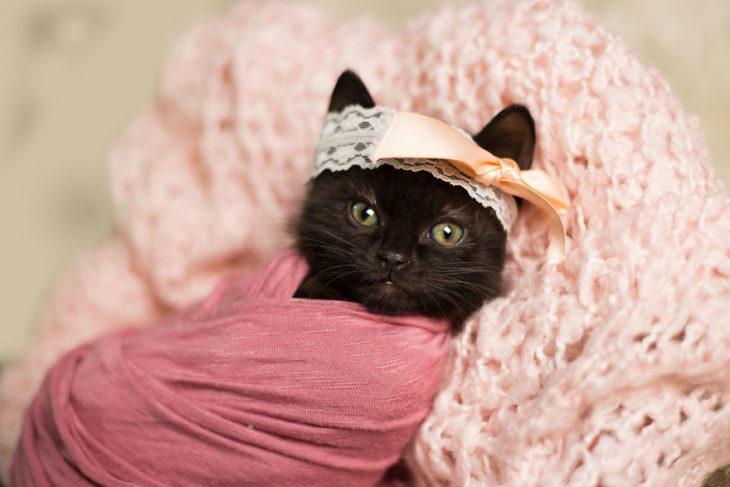gato negro bebé