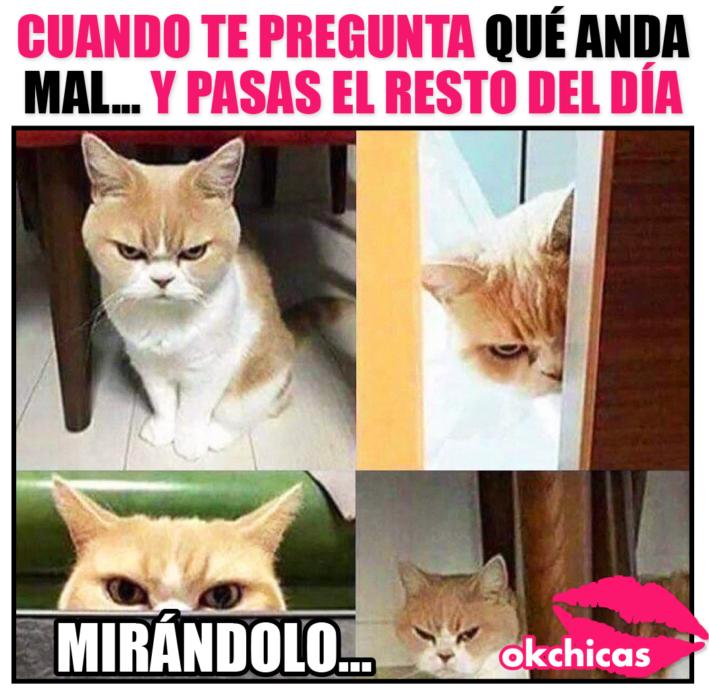 meme gatito