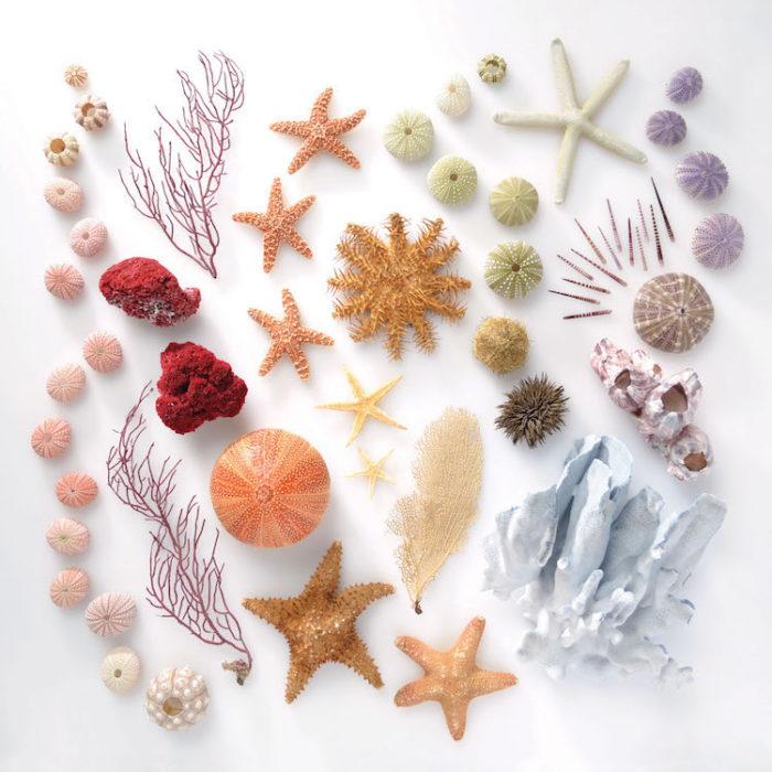 conchas y estrellas de mar ordenados por color