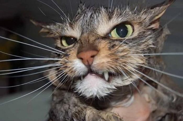 gato enojado 1
