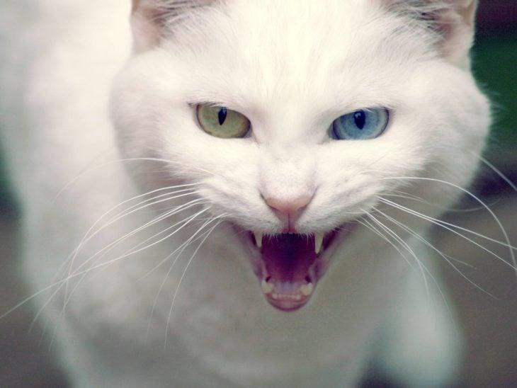 gato enojado 14
