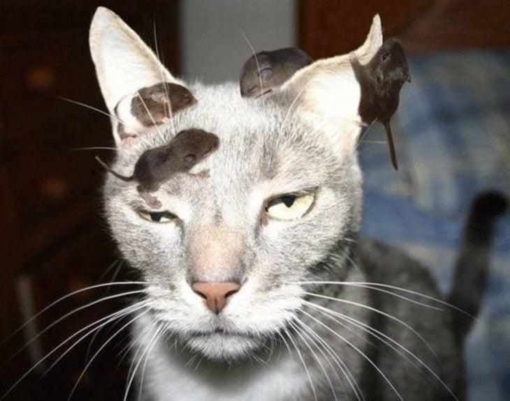 gato enojado 17