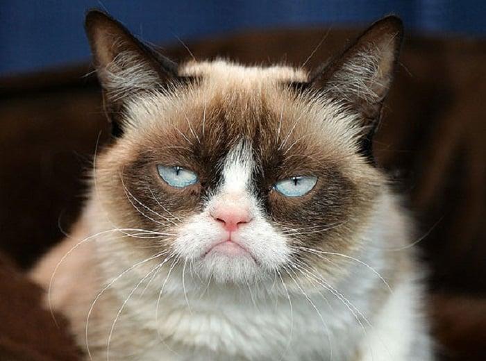 gato enojado 19