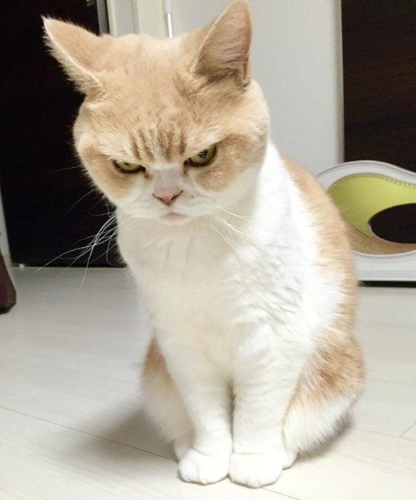 gato enojado 2