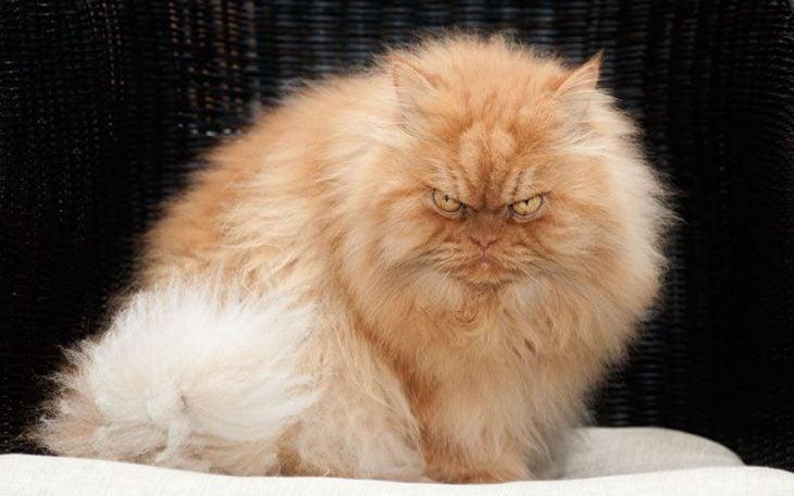 gato enojado 21