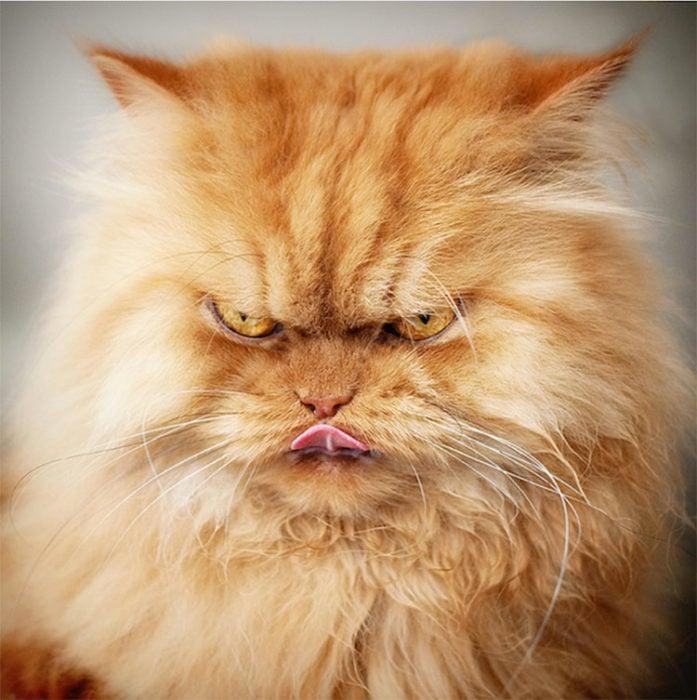 gato enojado 24