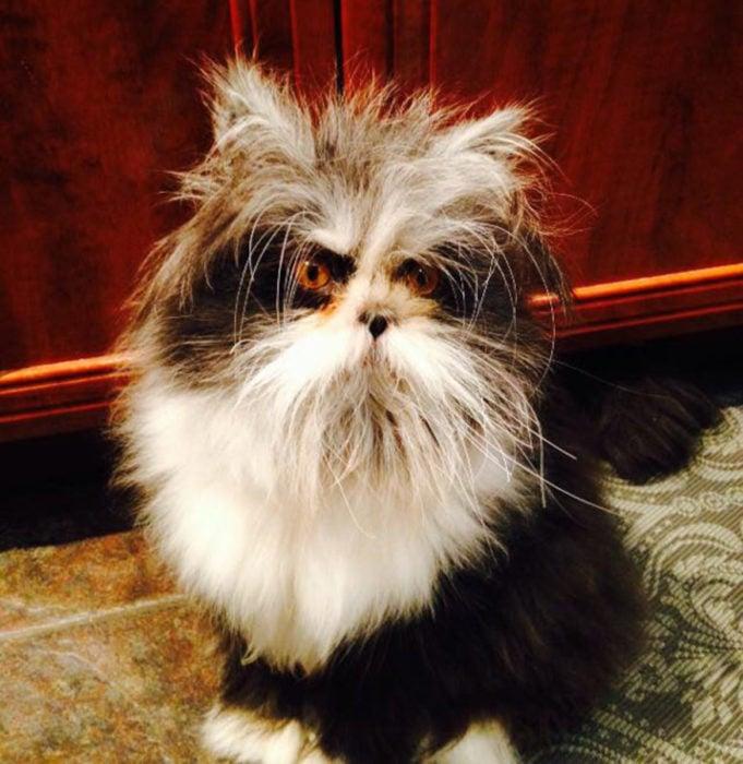 gato enojado 25