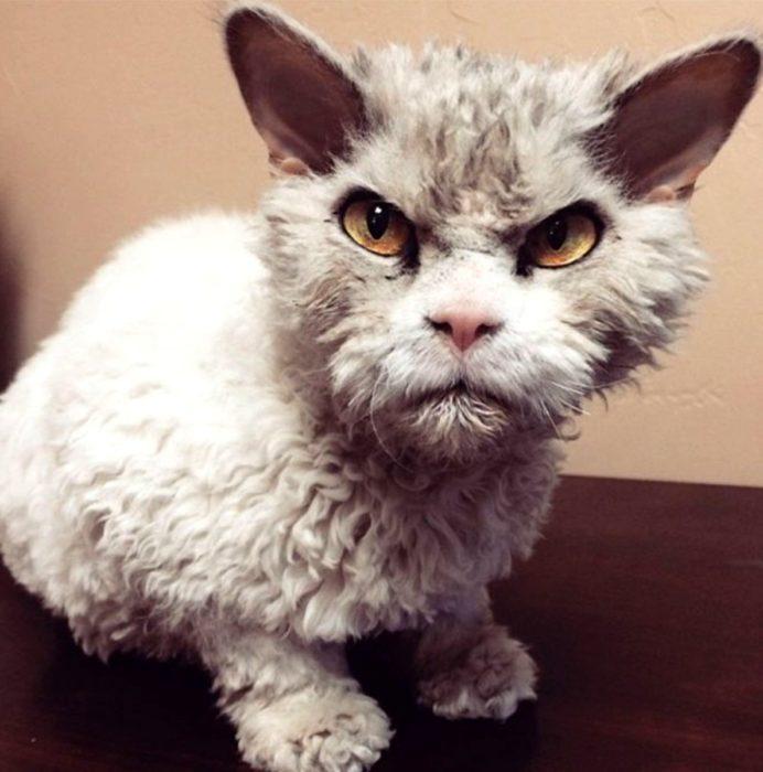 gato enojado 26
