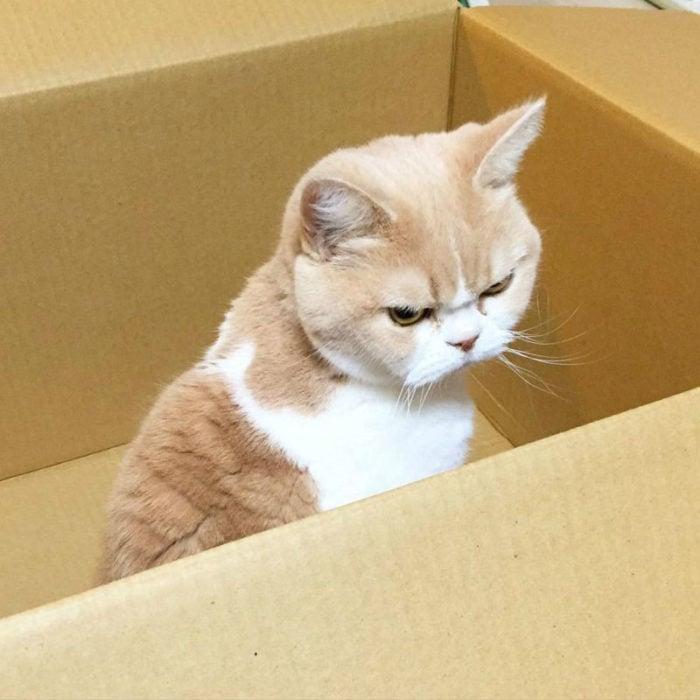 gato enojado 27
