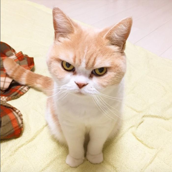 gato enojado 28
