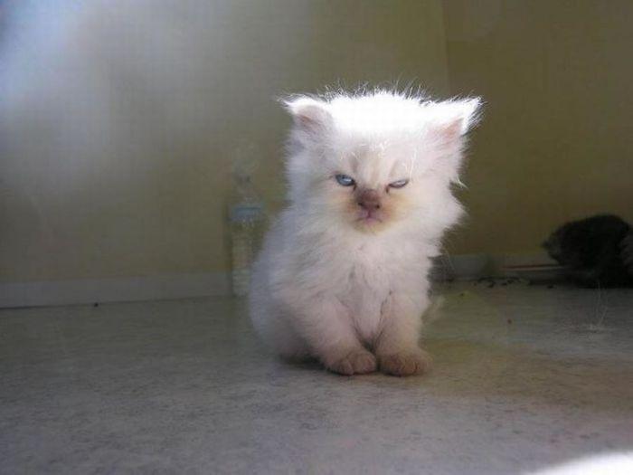 gato enojado 3