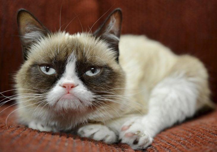 gato enojado 30