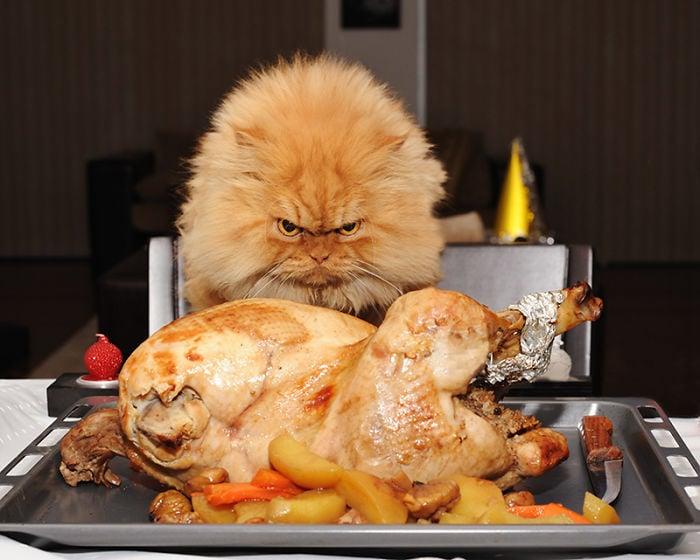 gato enojado 31