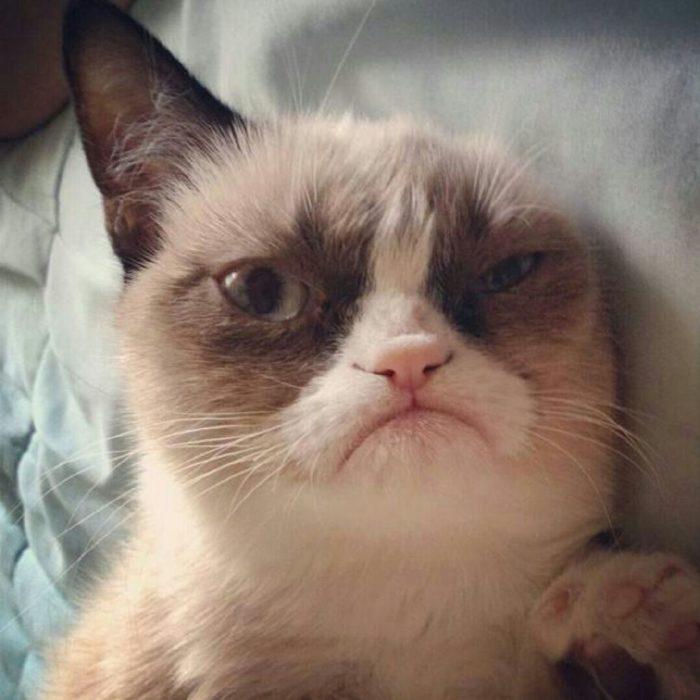 gato enojado 32