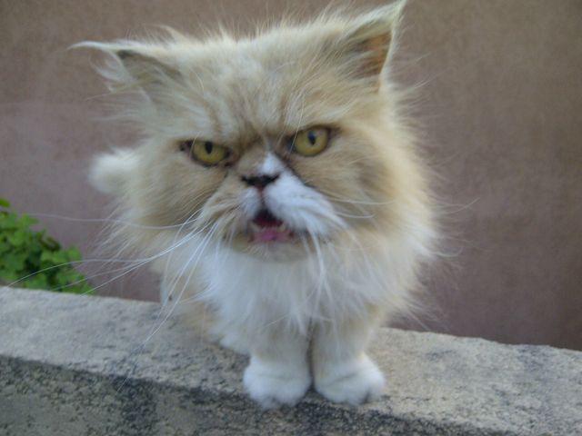 gato enojado 5