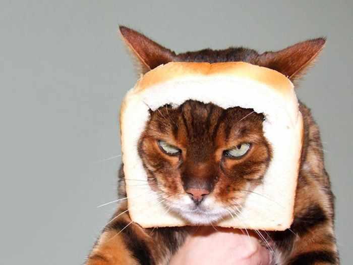 gato enojado 6