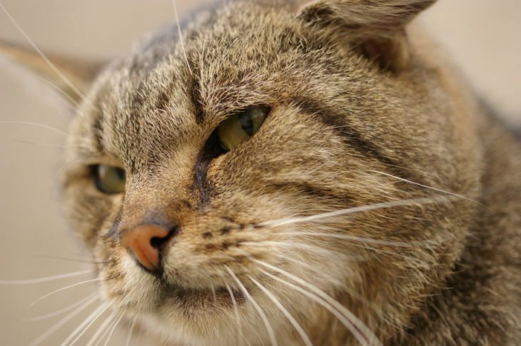 gato enojado 8