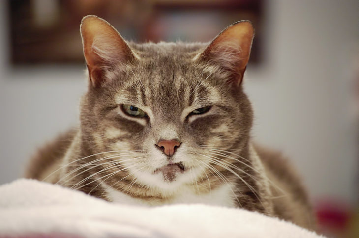 gato enojado 9