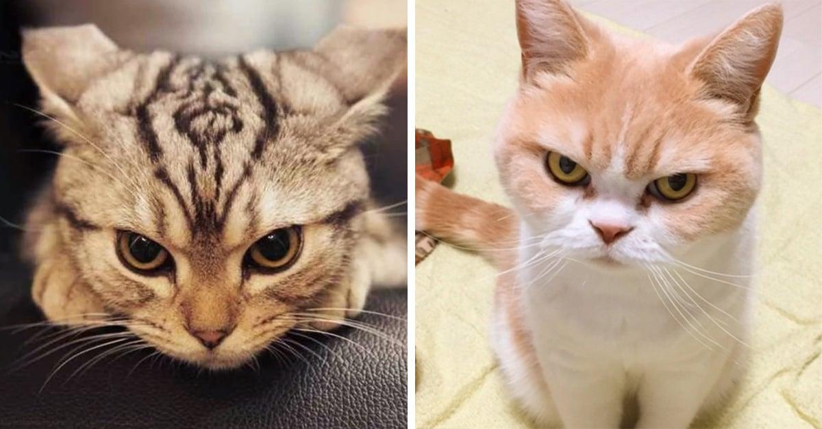 30 Gatos que se enojaron con sus esclavos, perdón, humanos