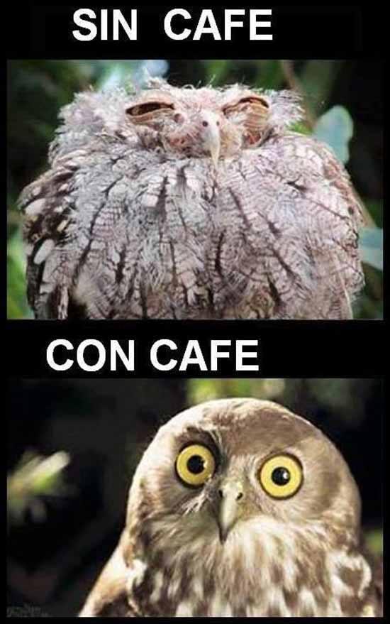 memes café 13