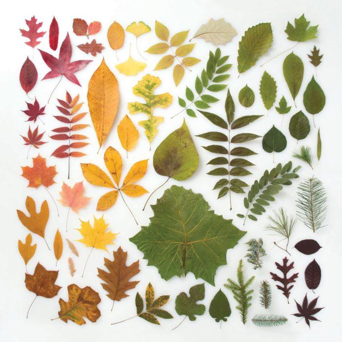 hojas ordenados por color