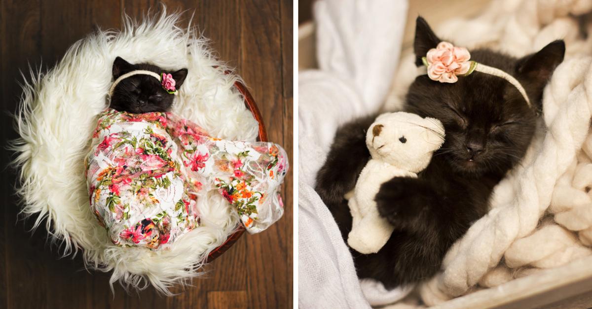 Sesión de fotos para celebrar el nacimiento del nuevo gatito de mi hija