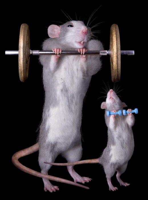 pastilla del ejercicio en ratones