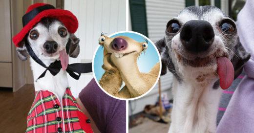 Este perrito es el doble de Sid, de La Era de Hielo