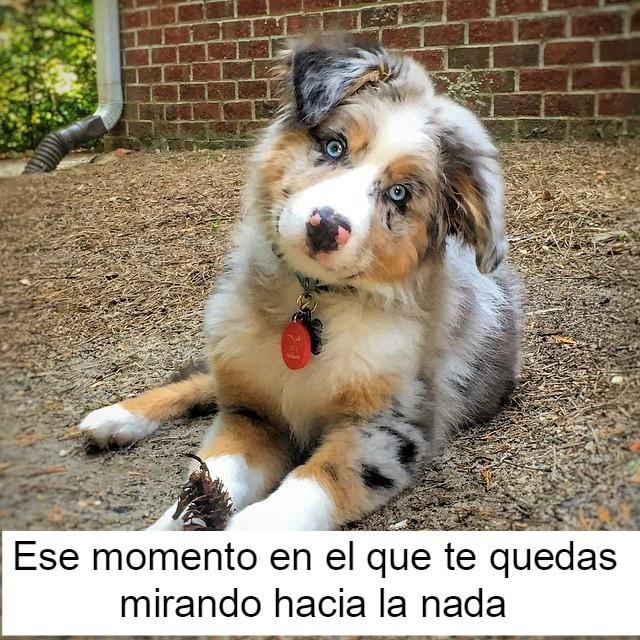 perrito feliz 12
