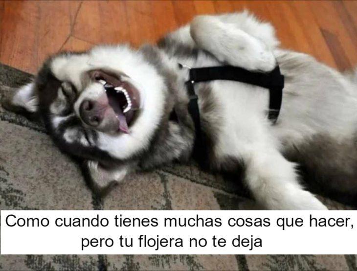 perrito feliz 13