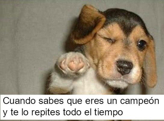 perrito feliz 14