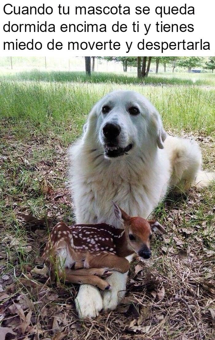 perrito feliz 16