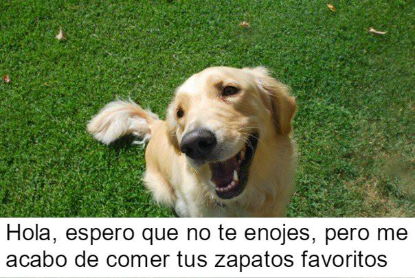 perrito feliz 17